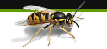 wasp removal loughborough